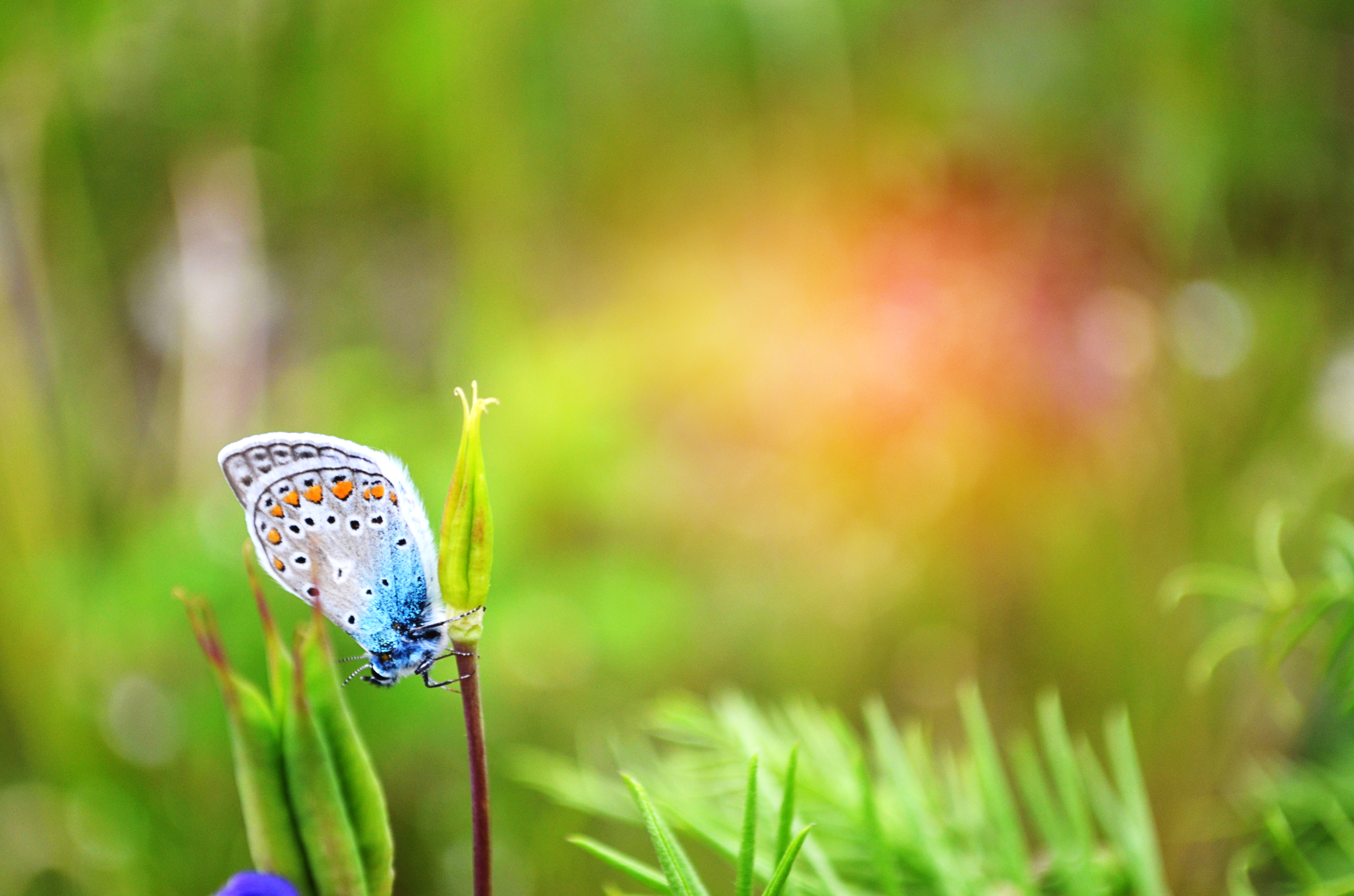 Бабочки растение макро  № 3660368  скачать