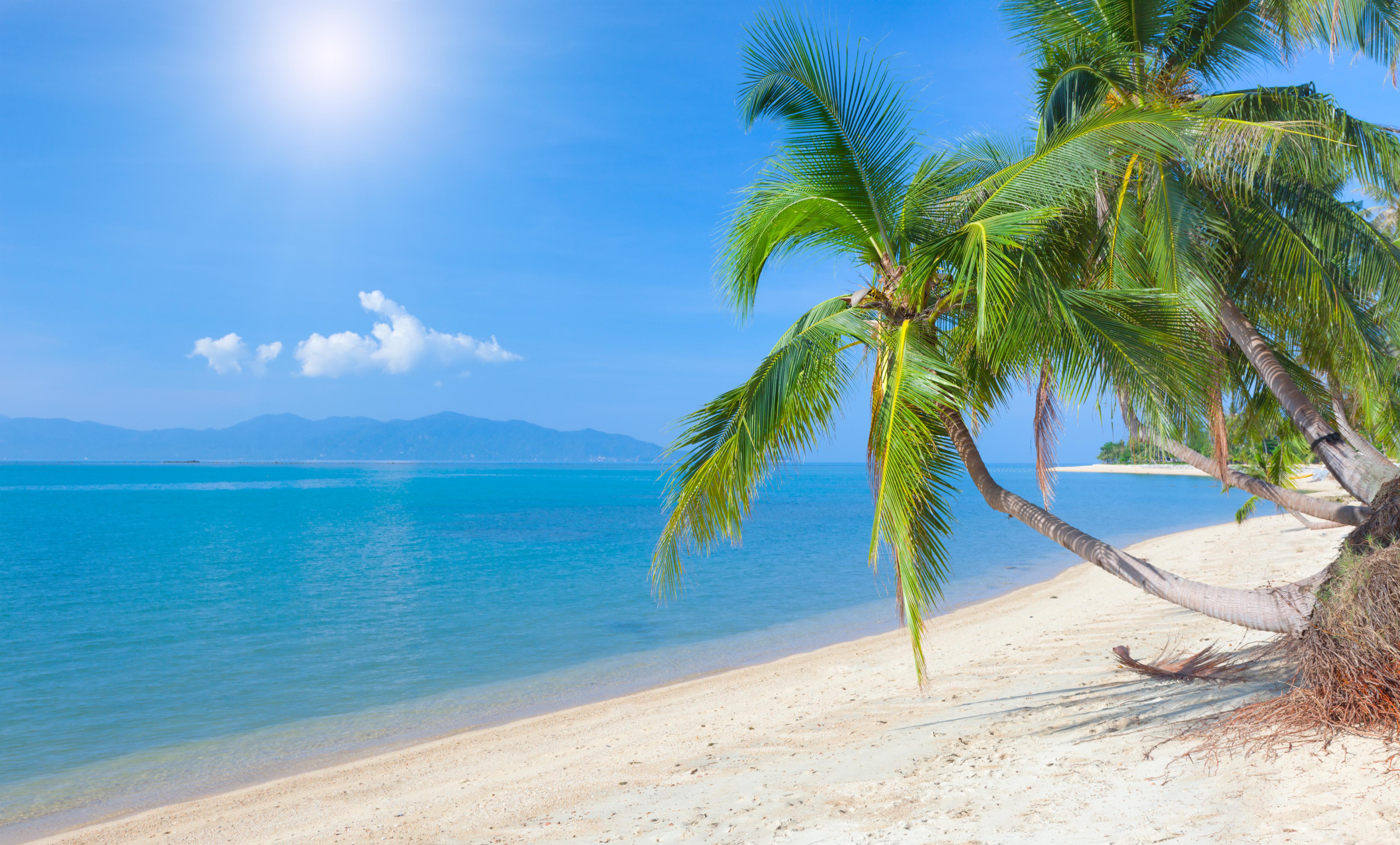Море песок пляж пальмы  № 3898027  скачать