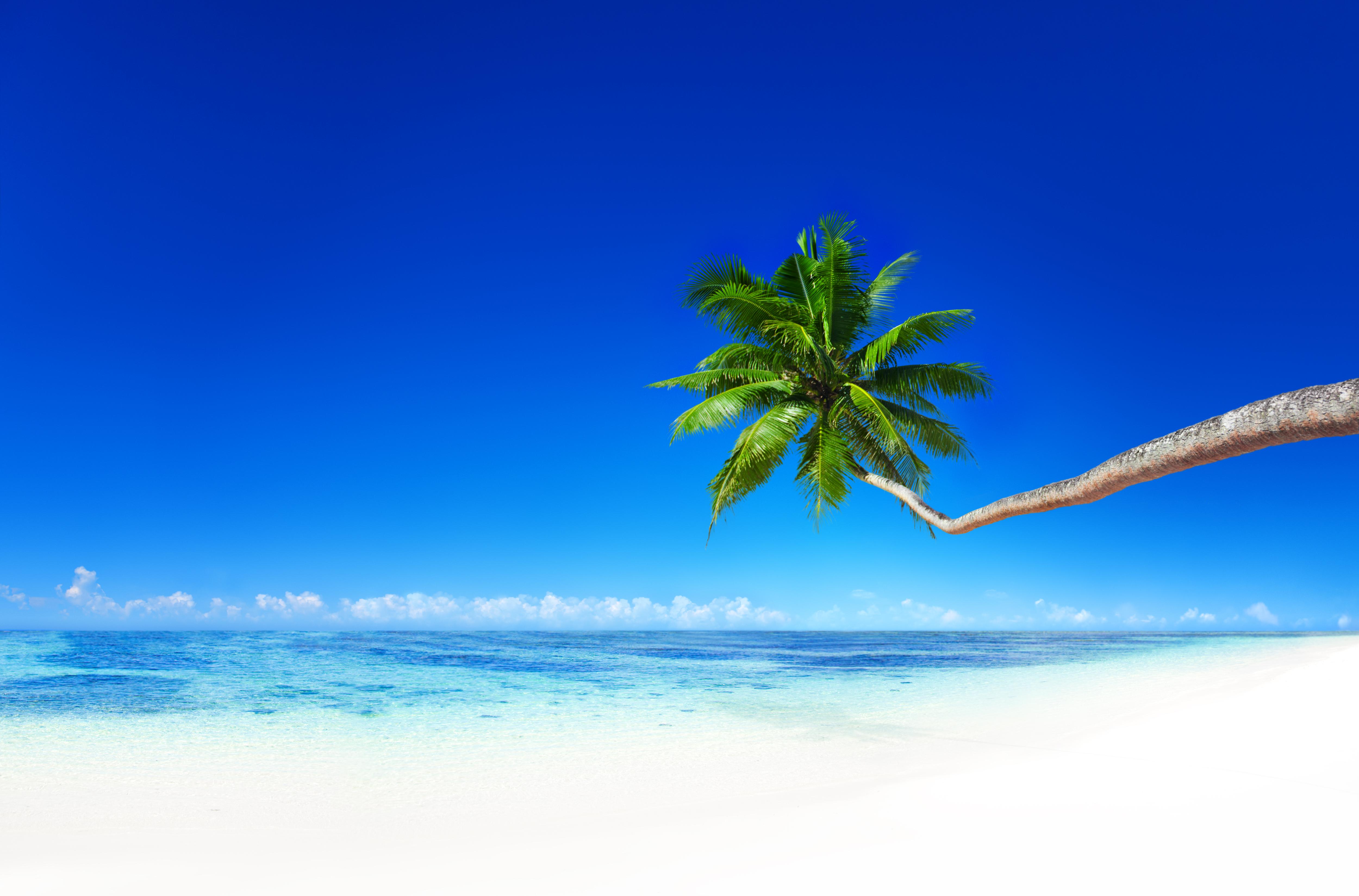 берег пальма море солнце пляж  № 3779776 без смс