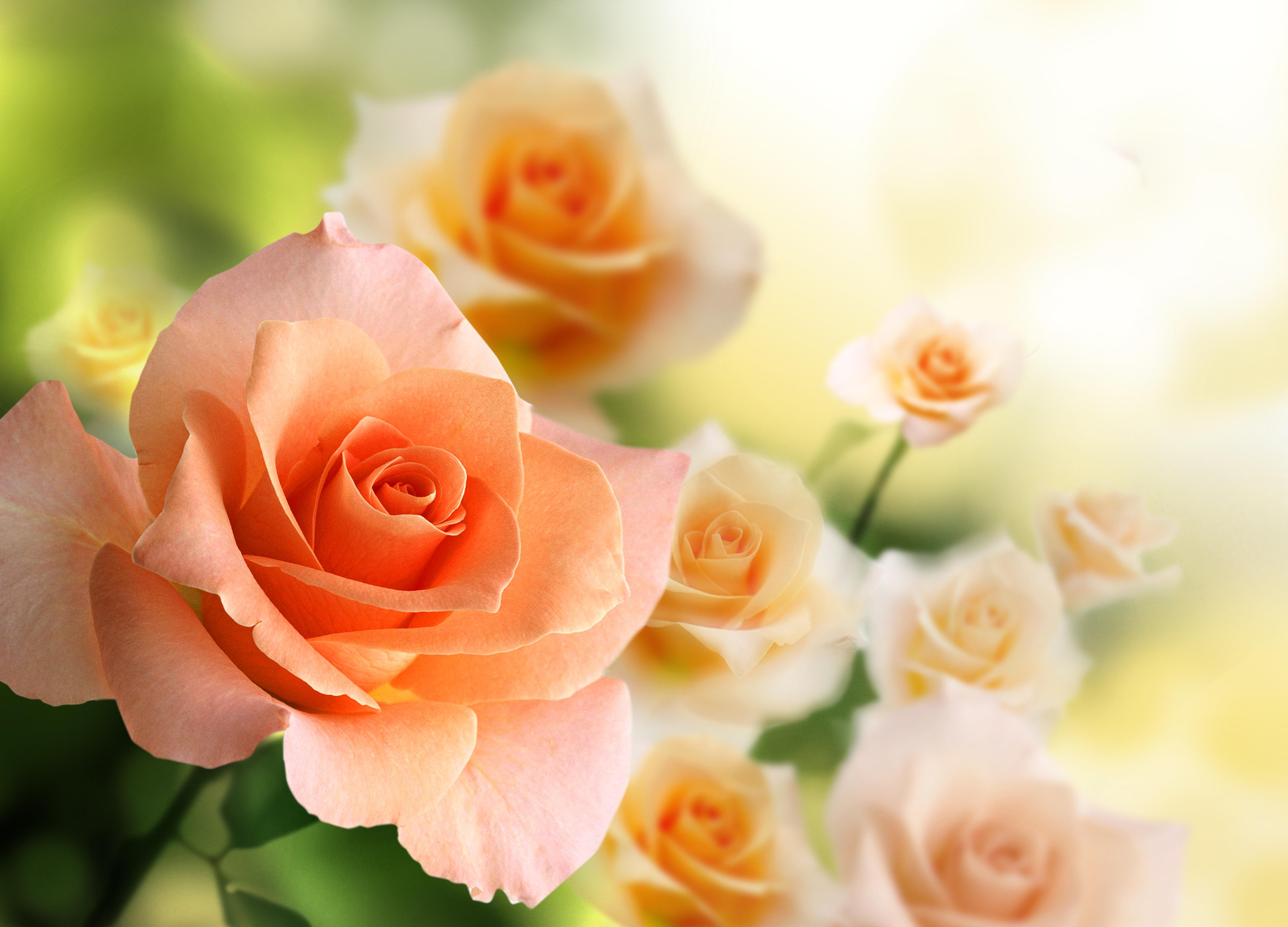 dark pink flowers -