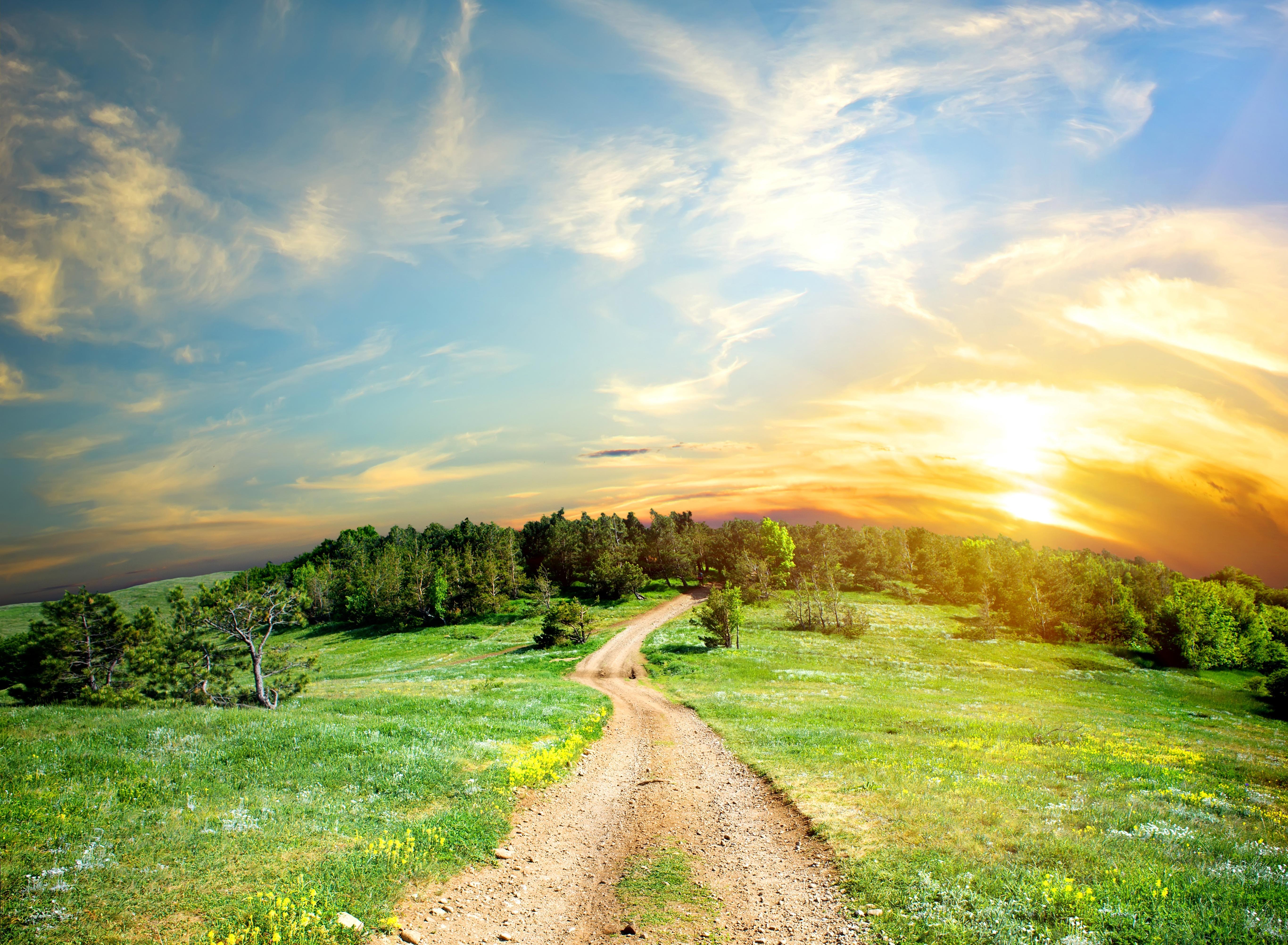 дорога, солнце, трава, деревья  № 3117795  скачать