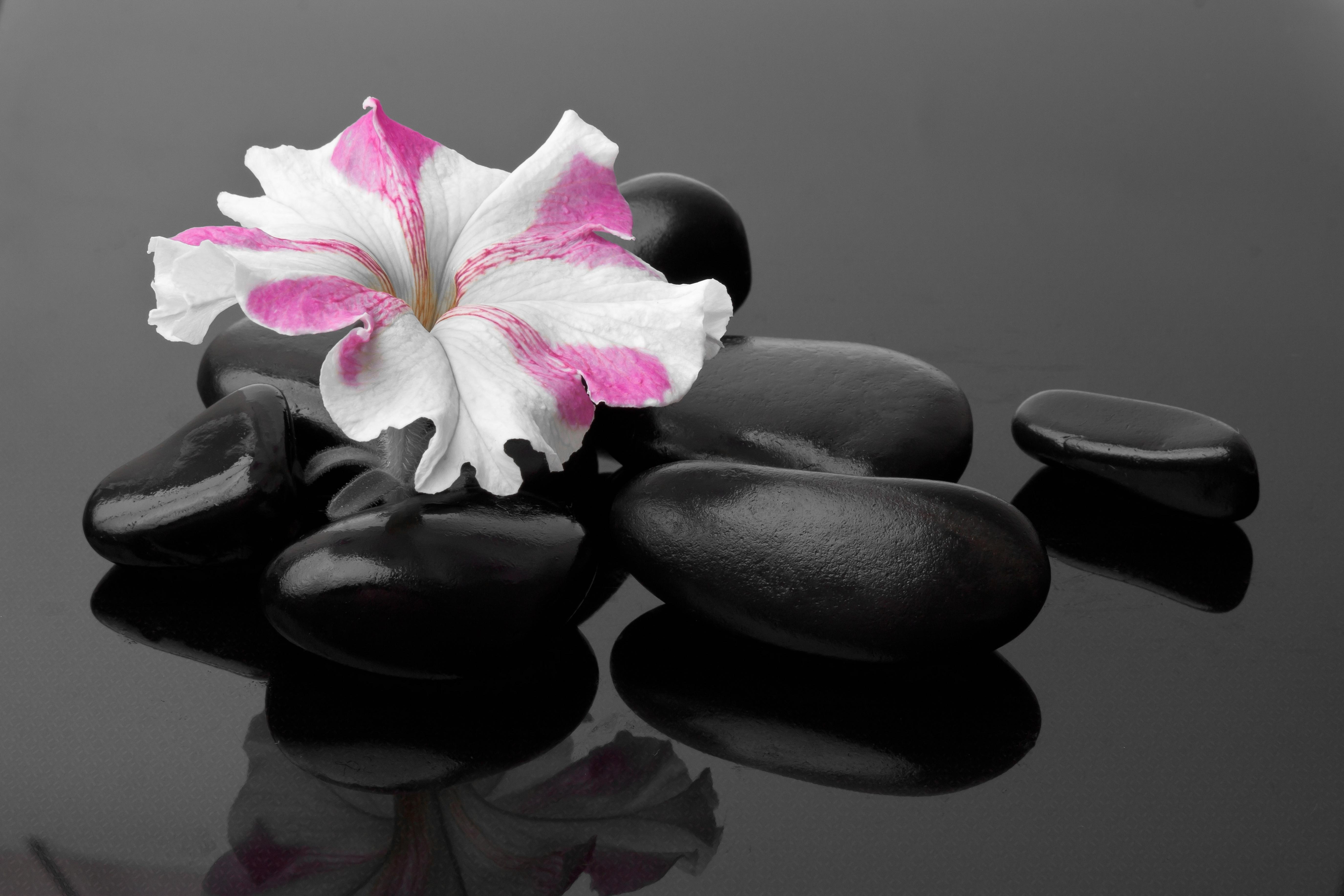 Камни черные цветок  № 2989350 бесплатно