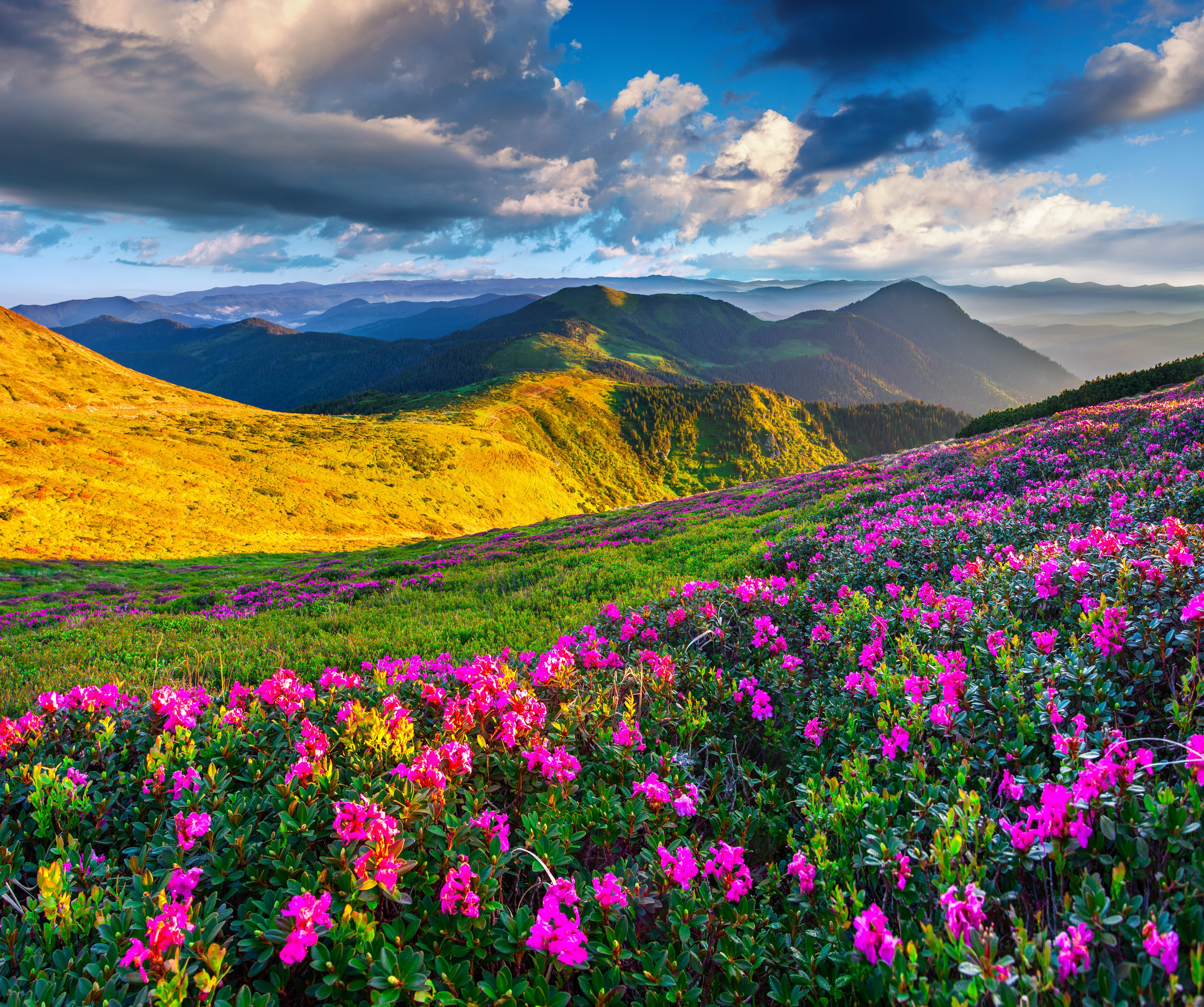 download wallpaper the sky the sun flowers mountains spring