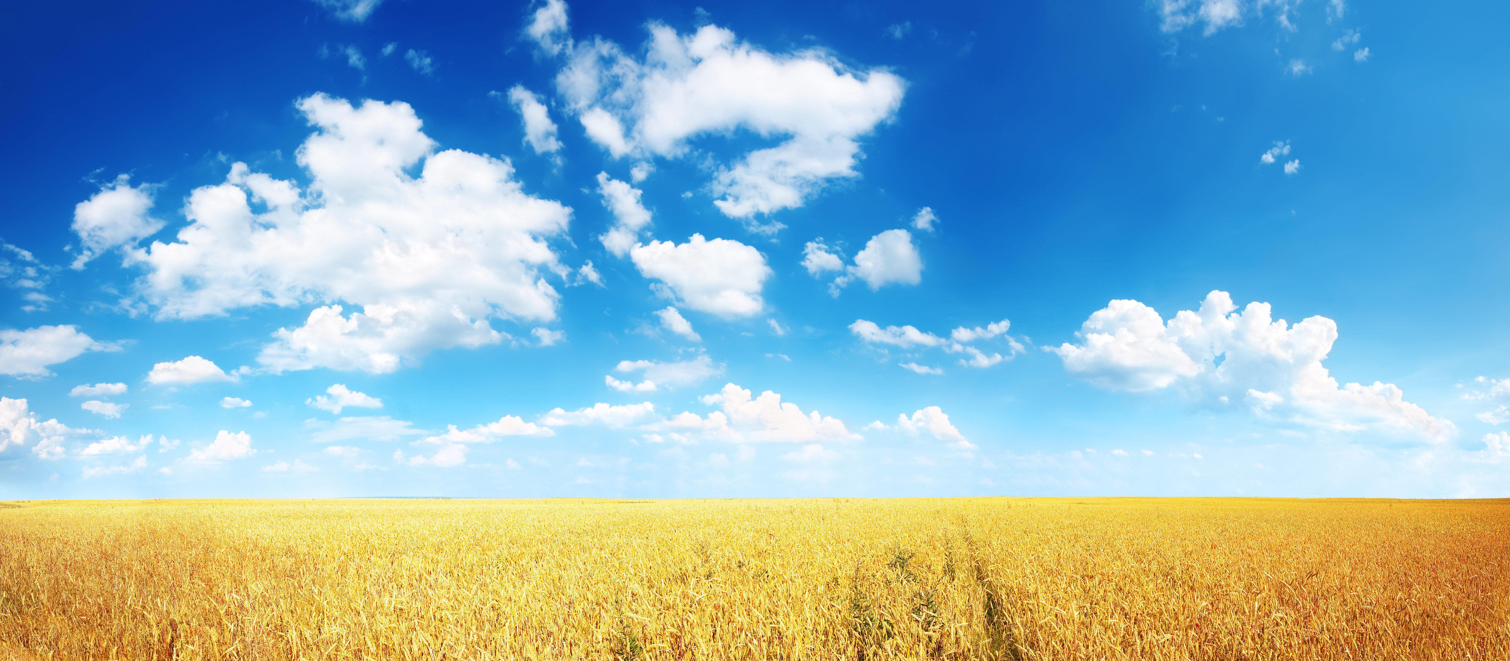 природа облака небо горизонт поле  № 204289 бесплатно