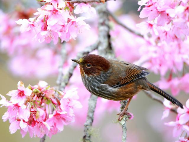 ptica derevo vetka cvetenie
