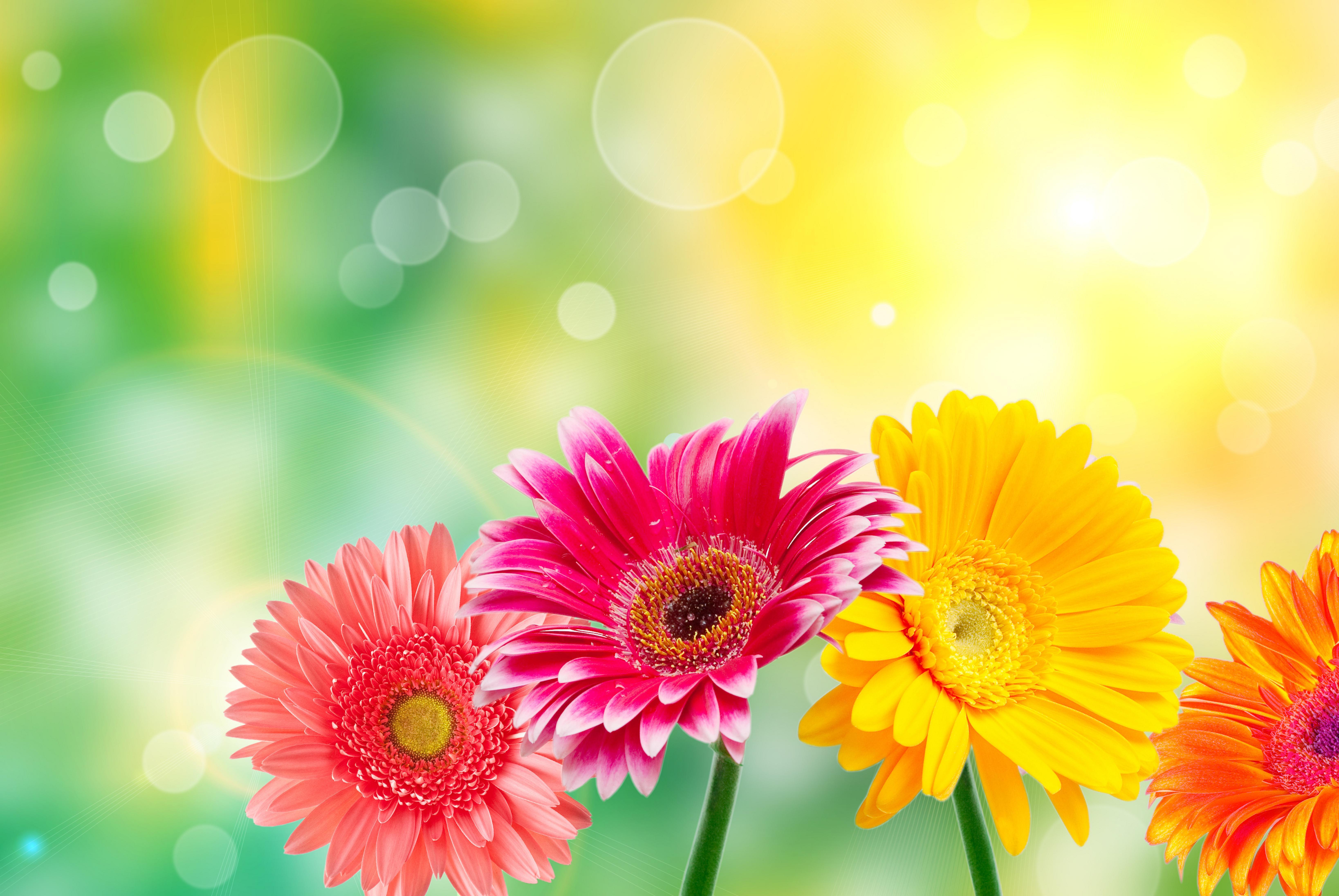 Цветы, яркий фон для поздравления