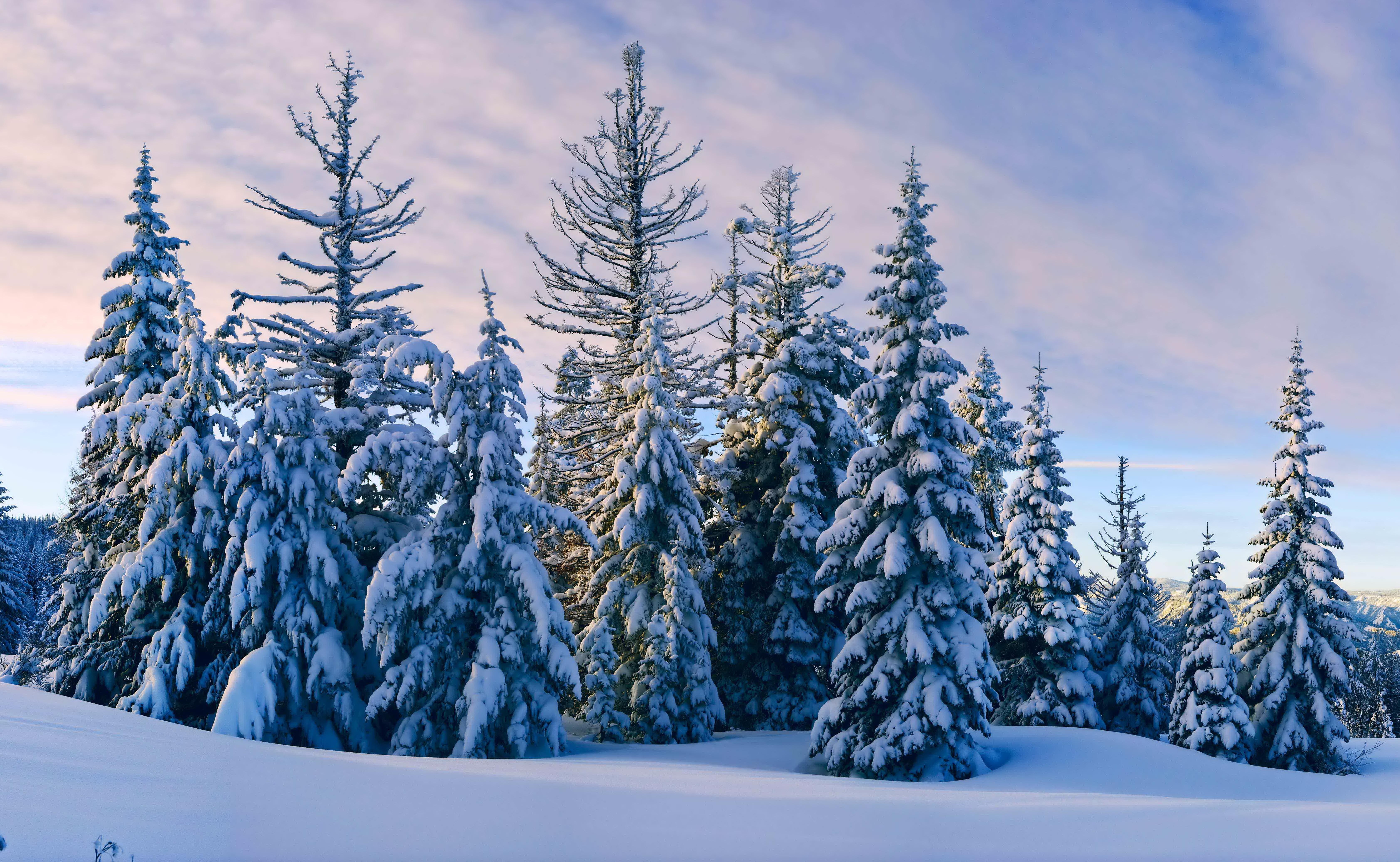 снег ели зима  № 3180880 бесплатно