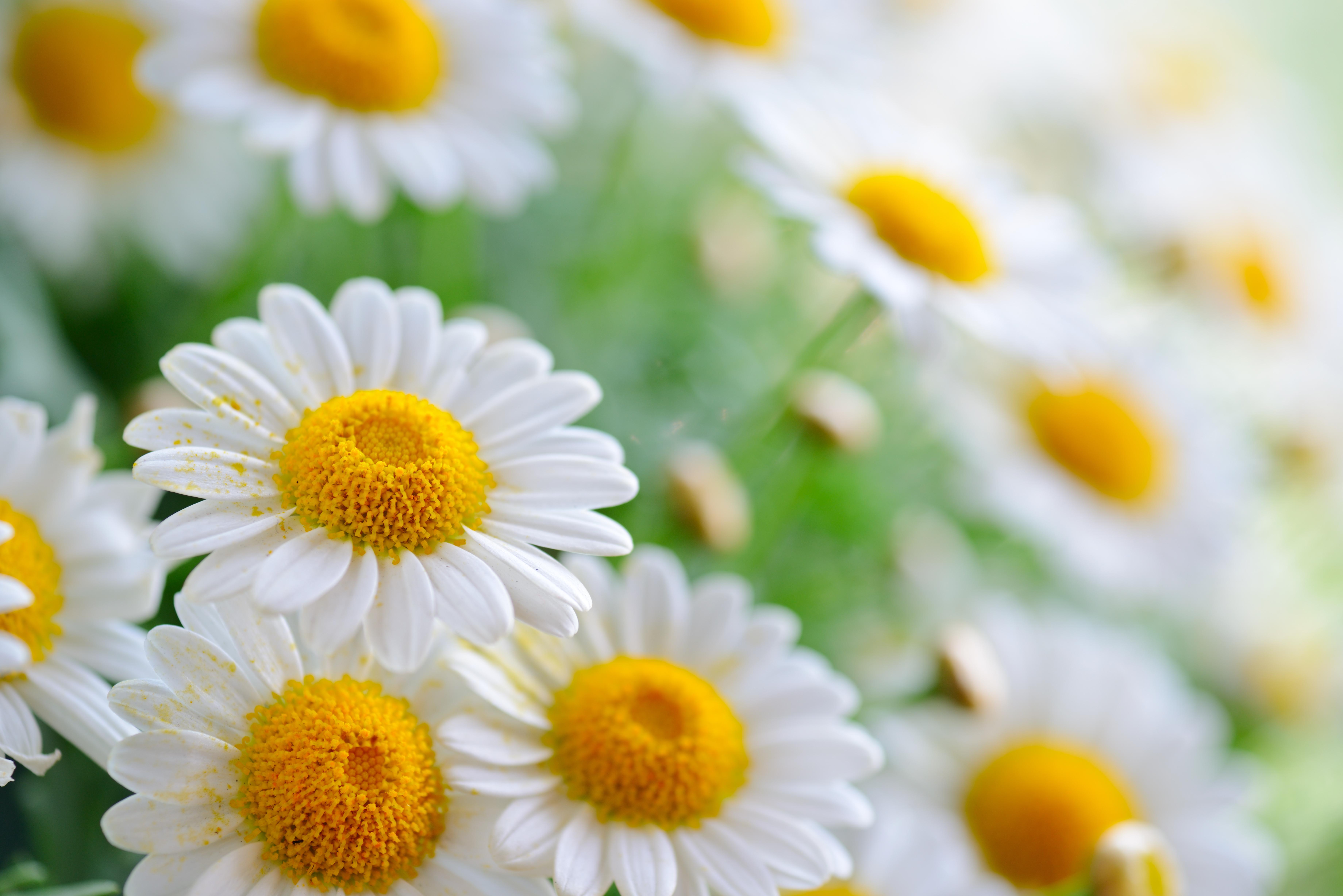 Обои на рабочий стол 1440 900 цветы