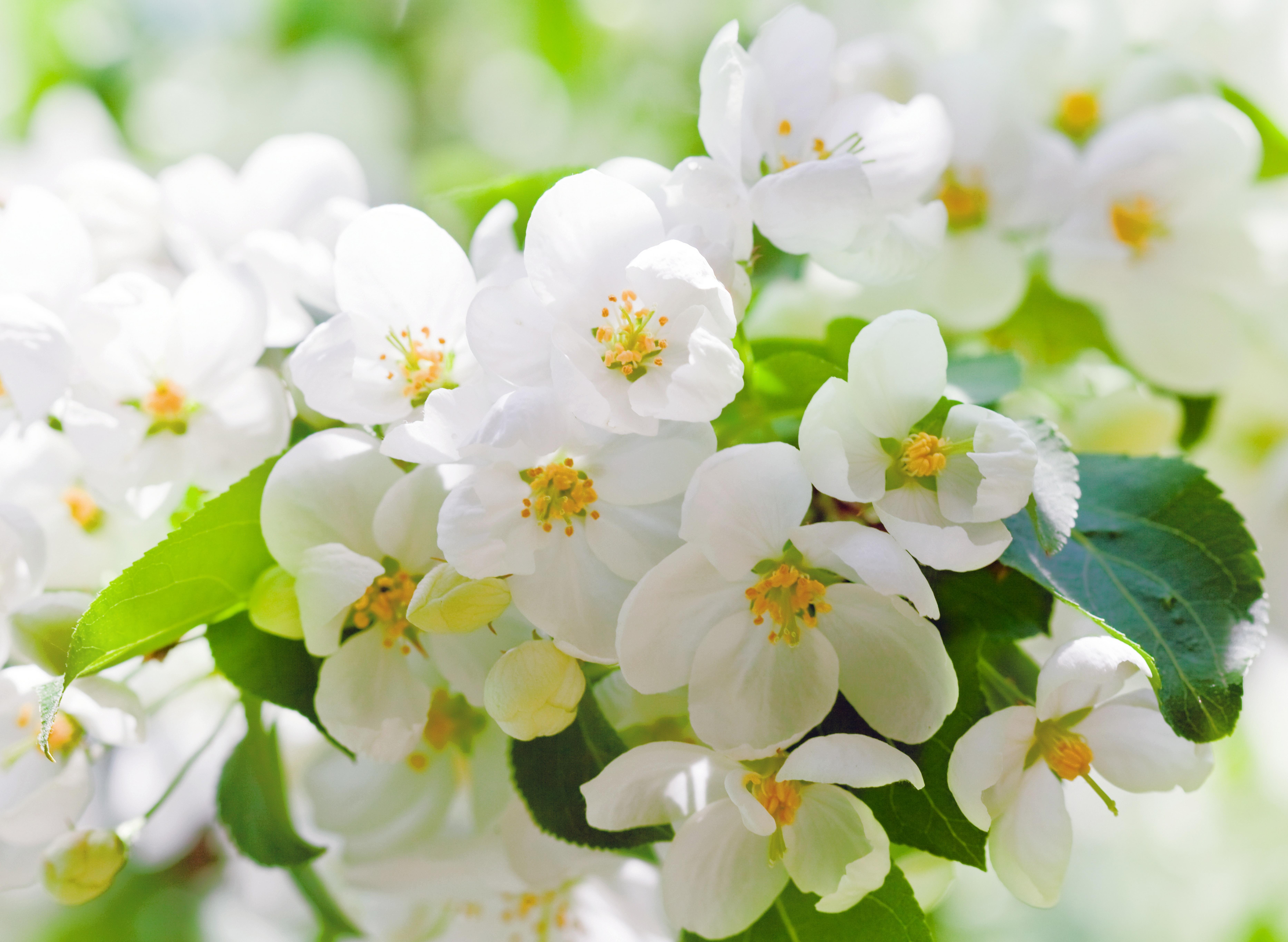 download wallpaper flowers