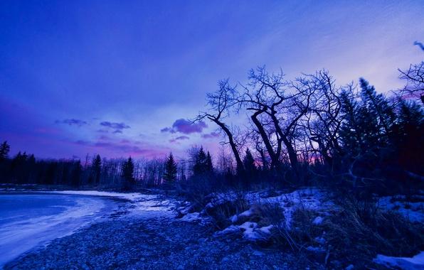 Picture winter, snow, trees, lake, dawn, glow
