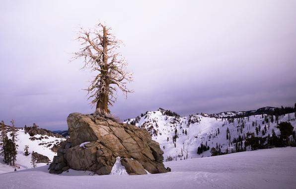 Picture winter, landscape, tree
