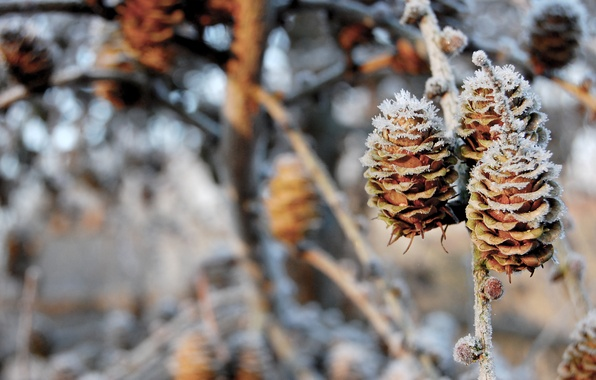 Picture winter, snow, branches, nature, bumps, nature, 1920x1200, winter, snow, bokeh, bokeh, branches, pinecones