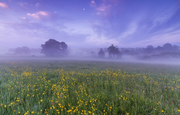 Picture field, the sky, clouds, trees, flowers, fog, dawn, the moon, glade, England, morning, UK, haze