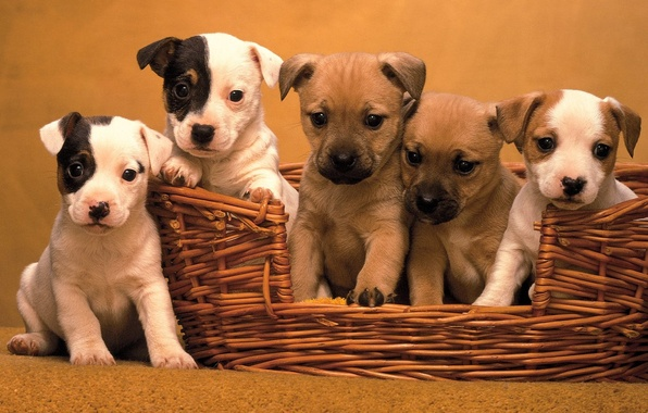 Picture Basket, five puppies
