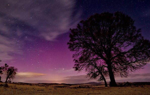 Picture the sky, stars, night, nature, tree, silhouette
