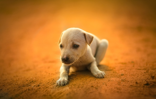 Picture white, each, dog, puppy, cute