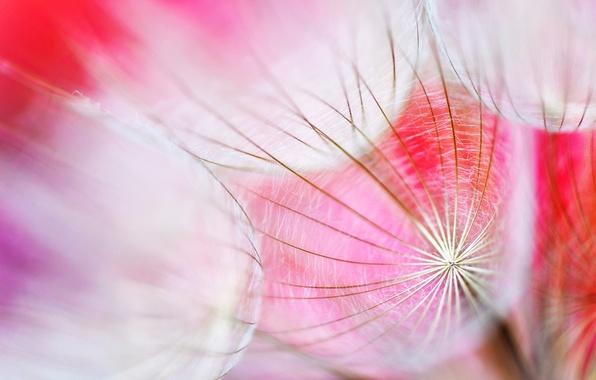 Picture flower, light, nature, Wallpaper, plant, web