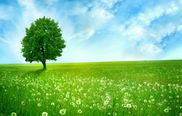 Picture field, the sky, clouds, tree, blue, space, dandelions, green, alone, dandelions, Greenlands, silent tree