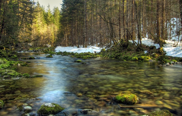 Picture forest, trees, river, stones, moss