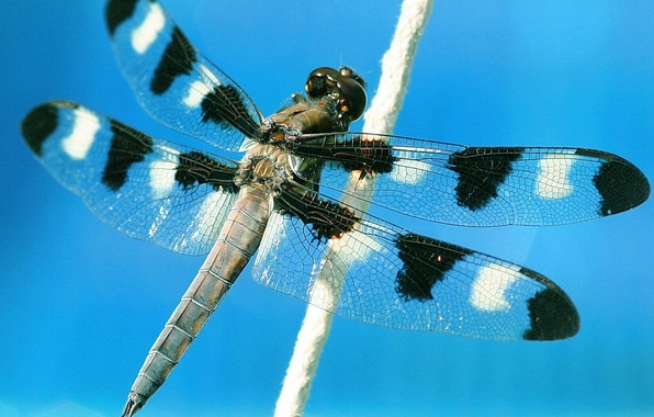 Picture the sky, macro, flight, dragonfly