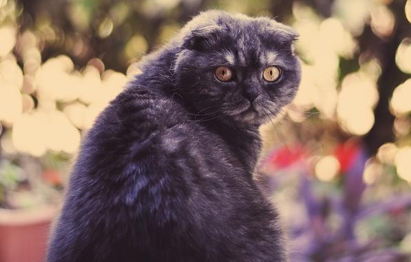 Picture eyes, look, feline