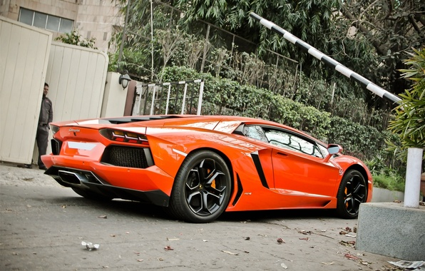 Picture trees, orange, gate, the fence, lamborghini, side view, orange, aventador, lp700-4, Lamborghini, aventador