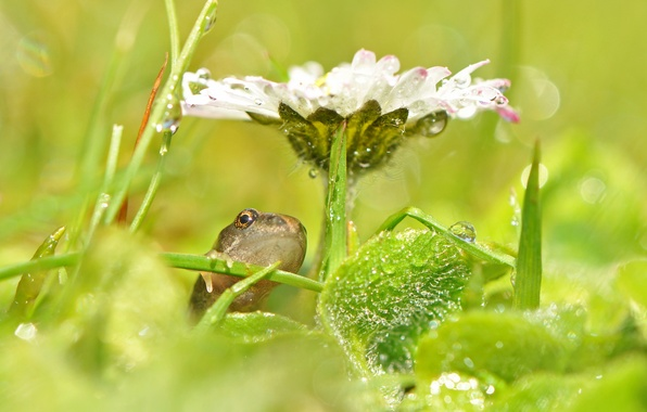 Picture flower, grass, drops, glare, frog