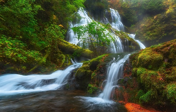 Picture forest, waterfall, moss, cascade, Washington, Washington, Columbia River Gorge, Panther Creek Falls, the Columbia river …