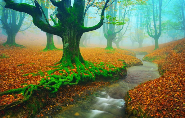 Picture autumn, trees, river, stream, foliage, moss, Spain, November, Beech, Biscay, Alava, Basque country