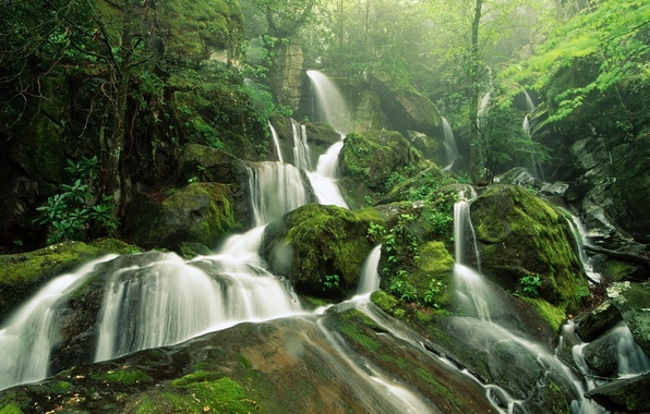 Picture forest, trees, green, stones, Waterfall