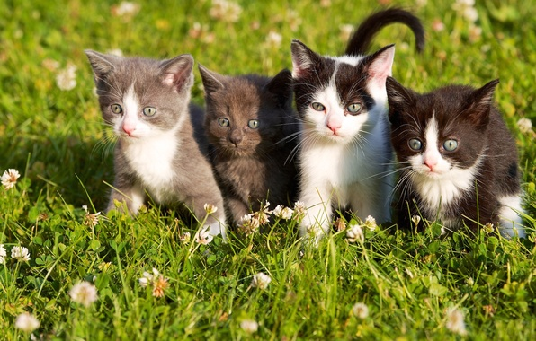 Picture grass, eyes, kittens, kids