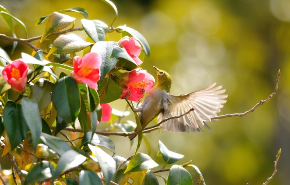 Picture greens, leaves, flowers, branches, bird, wings, flight