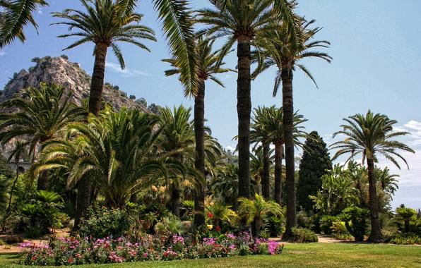 Picture grass, flowers, Park, palm trees, France, lawn, Menton