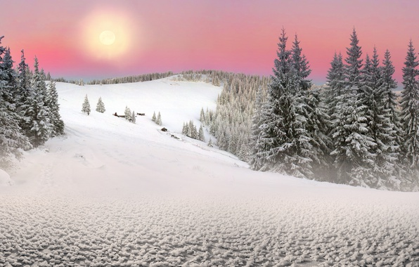 Picture The sun, Nature, Winter, Snow, Spruce, Ukraine, Carpathians, Transcarpathia