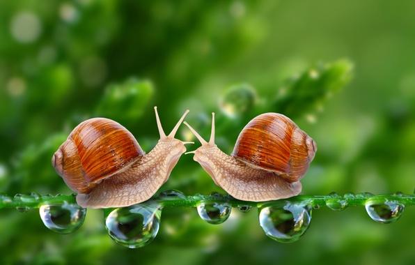 Picture drops, two, snails, stem, pair, bokeh