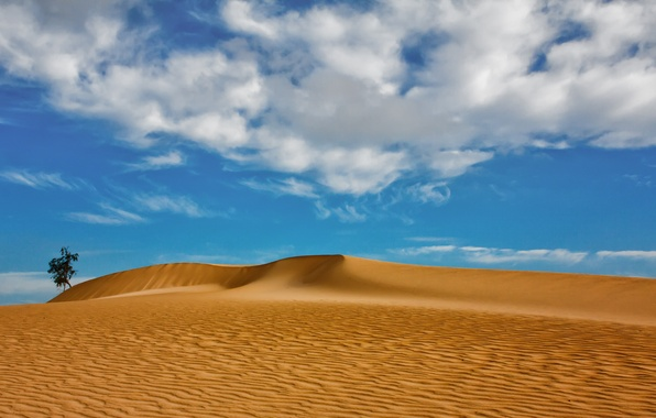 Picture sand, clouds, tree, dunes, Spain, Spain, Canary Islands, Canary Islands