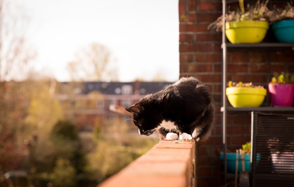Picture cat, black and white, balcony, pots