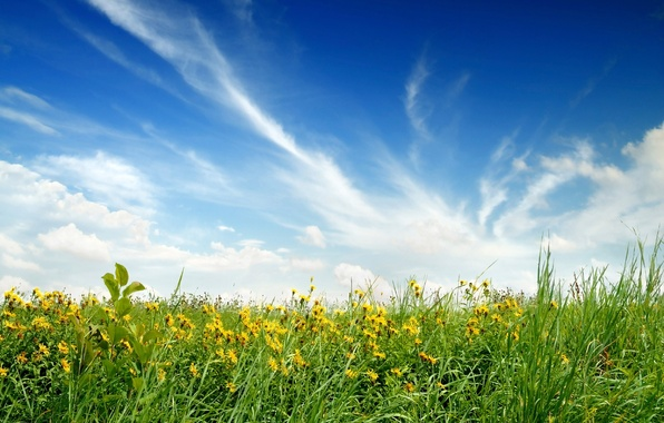 Photo wallpaper flowers, the sky, field, nature