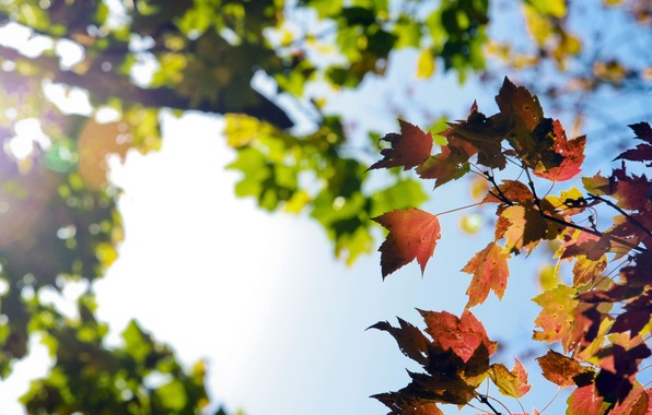 Picture autumn, the sky, branches, nature, foliage
