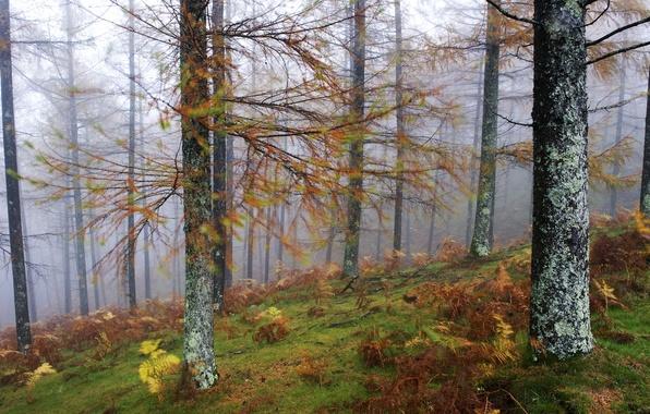 Picture forest, trees, landscape, nature, fog