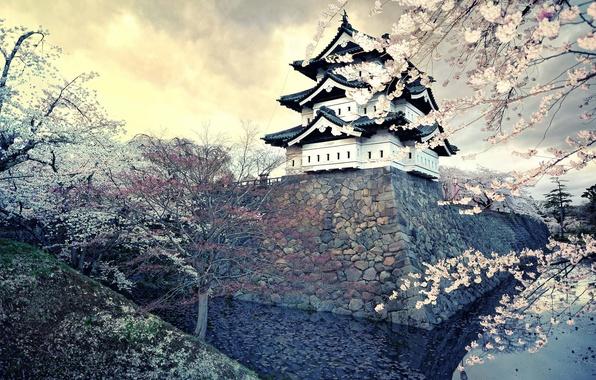 Picture the city, spring, Japan, Sakura