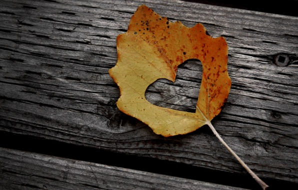 Picture autumn, leaves, creative, tree, mood, foliage, heart, leaf, heart, log, leaf, wood, heart, sheets, nail, …