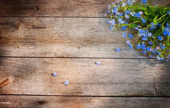 Picture flowers, tree, floor, Board, field, forget-me-nots