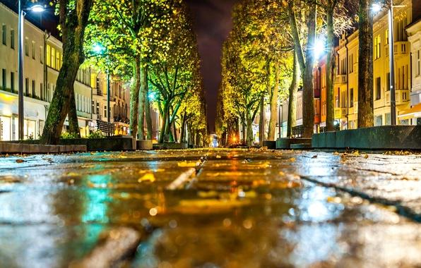 Wallpaper road, autumn, asphalt, leaves, macro, light ...