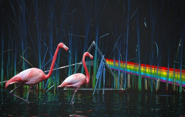 Wallpaper Pond, Pink Floyd, Flamingo, Dark Side Of The Moon, Dispersion of light, The Dark Side Of The Moon, Pink Floyd images for desktop, section музыка - ...