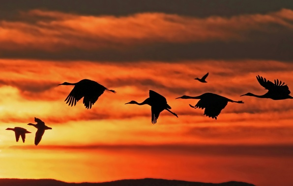Picture the sky, clouds, flight, sunset, bird, pack, stork, duck