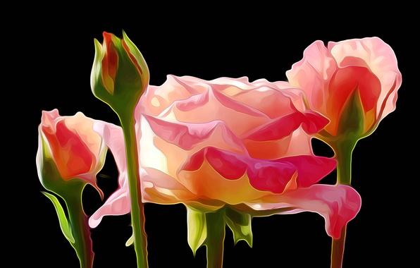Picture rendering, figure, rose, vector, petals, Bud