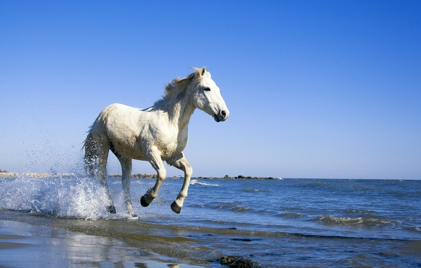 Picture sea, water, horse, shore, Horse