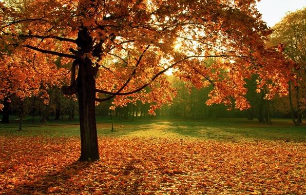 Picture autumn, nature, Park, tree, foliage
