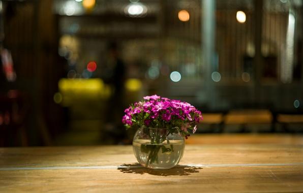 Picture macro, flowers, glare, table, petals, pink, vase, Raspberry